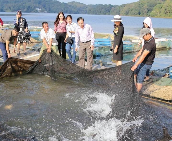 Mô hình nuôi cá lăng trong lồng tại hồ Pa Khoang (Điện Biên) được đánh giá có triển vọng, cá sinh trưởng phát triển tốt, tỷ lệ sống đạt trên 80%.