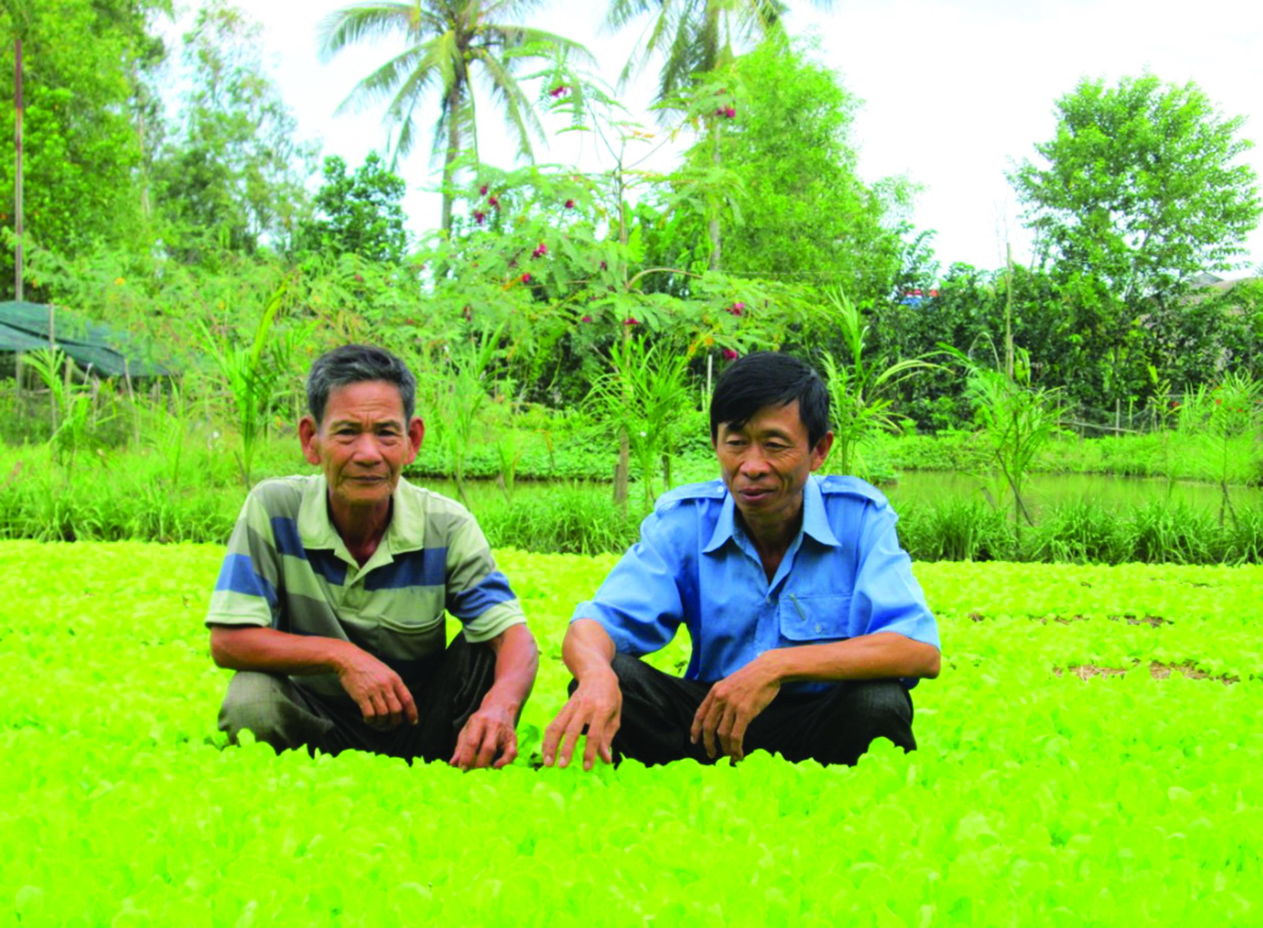 Từ nguồn vốn hỗ trợ phát triển sản xuất cho đồng bào Khmer, Anh Danh Nưl (bên phải) ở ấp Láng Sen (xã Bàn Thạch, Giồng Riềng) đã trồng màu chuyên canh cho thu nhập khá.