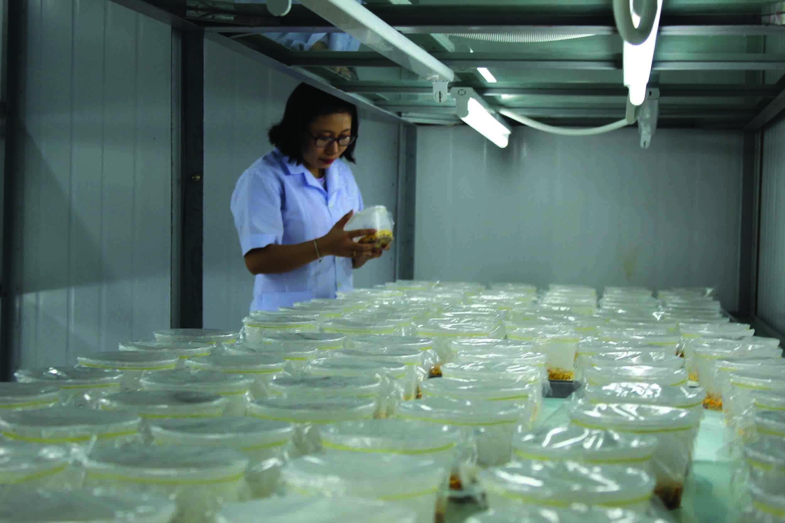 Cán bộ của Trung tâm kiểm tra tốc độ sinh trưởng của nấm.