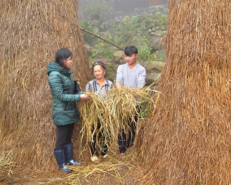 Cán bộ Phòng Nông nghiệp hướng dẫn người dân dự trữ, chế biến thức ăn cho trâu, bò trong mùa giá rét tại xã Sín Chéng, huyện Si Ma Cai.