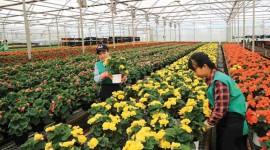 Phát triển nông nghiệp kỹ thuật số