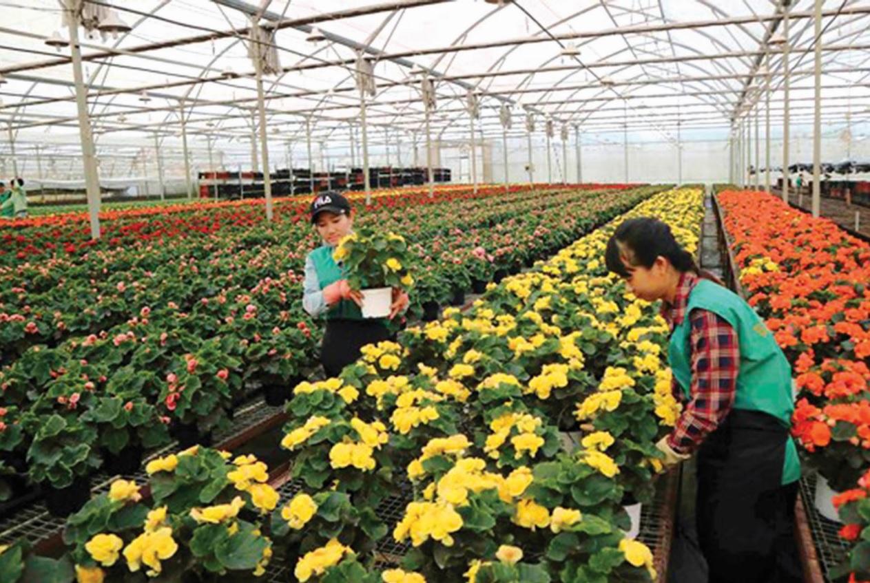 Nông nghiệp công nghệ cao tại Lâm Đồng có nhiều dấu ấn của các doanh nghiệp đến từ Hà Lan.
