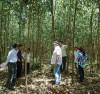 Trồng và khai thác rừng bền vững