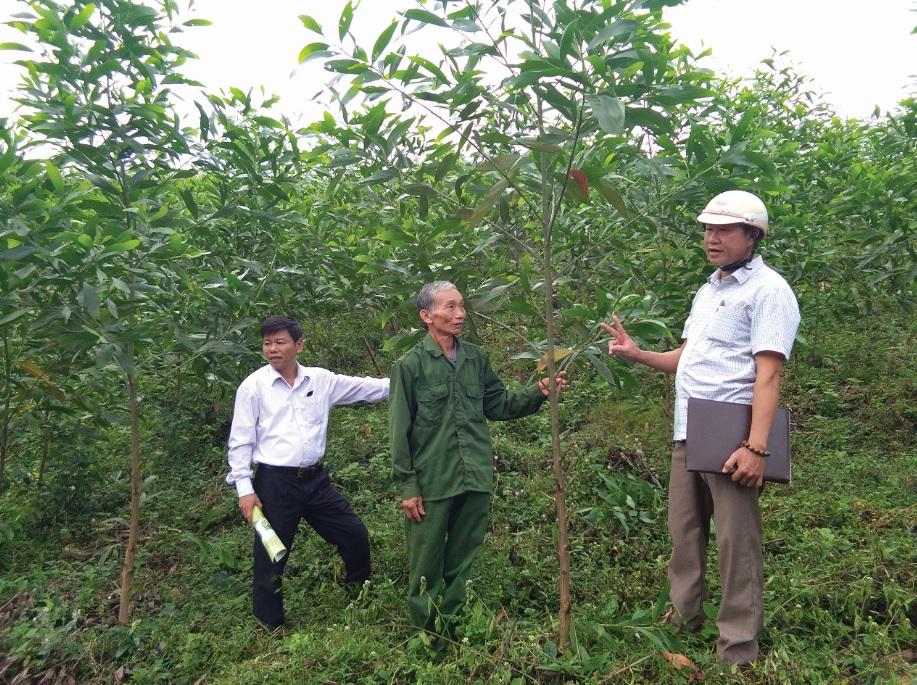Mô hình trồng rừng gỗ lớn giống Keo lai nuôi cấy mô của ông Đinh Minh Việm xã Hồng Hóa.