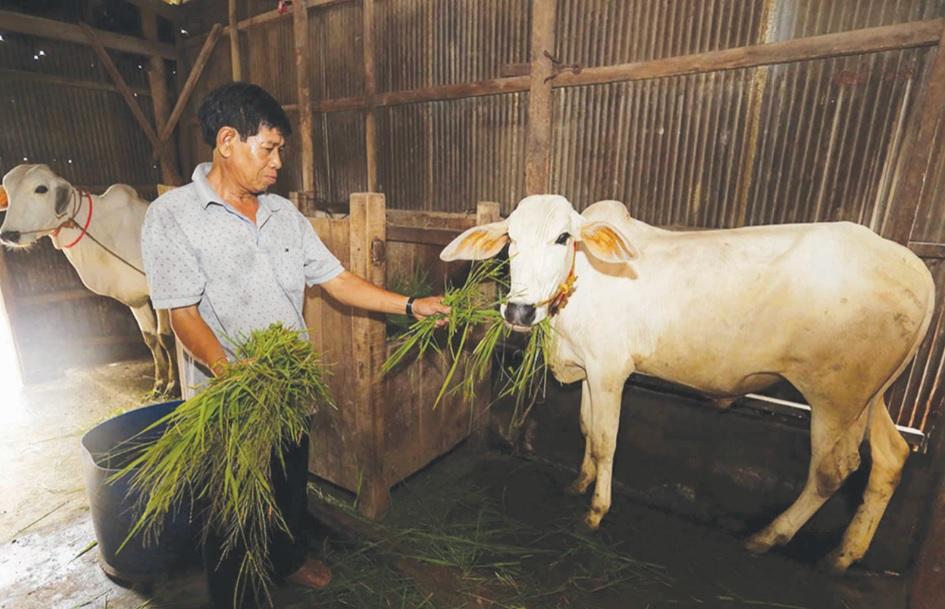 Từ nguồn vốn vay ưu đãi của NHCSXH, cuộc sống gia đình ông Chau Sôm Hiệp, dân tộc Khmer, ở ấp An Hòa, xã Châu Lăng, huyện Tri Tôn ngày càng ổn định hơn.