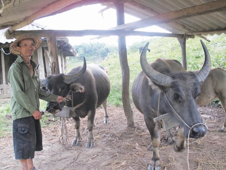 Được thụ hưởng dự án hỗ trợ con giống vật nuôi nông dân huyện Tủa Chùa vươn lên thoát nghèo bền vững.