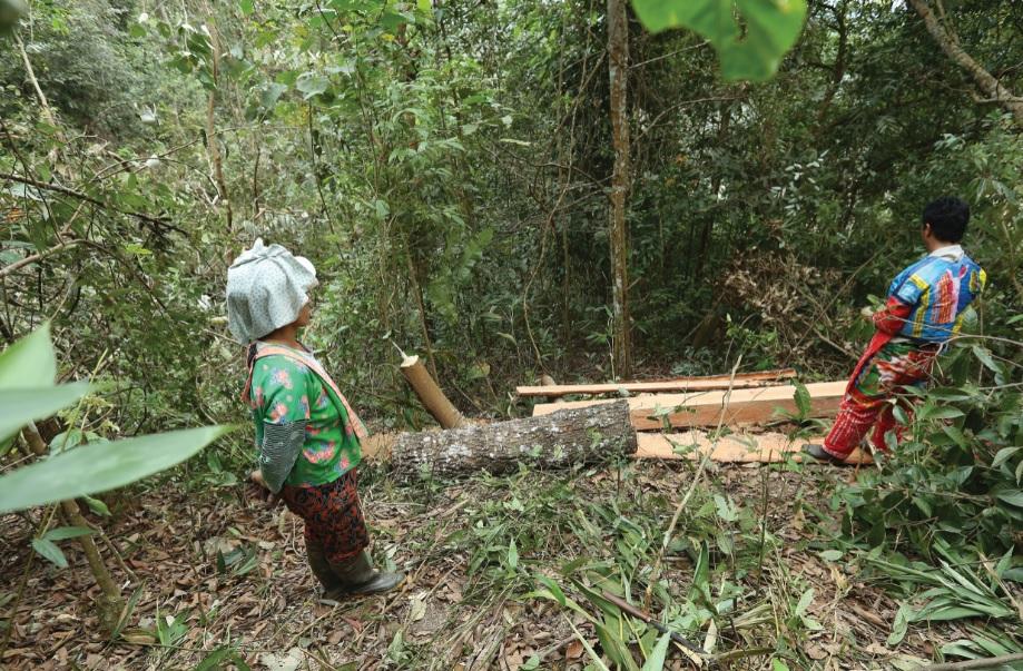 Nhiều điểm cắt xẻ gỗ được hình thành, khiến cánh rừng Nà Pen như một công trường khai thác gỗ.