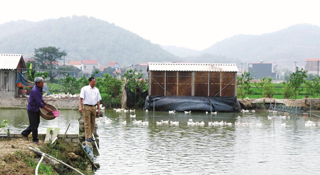 Sau khi tìm hiểu kỹ thuật từ Internet, ông Nguyễn Văn Nhông đã mạnh dạn mở rộng diện tích nuôi trồng.