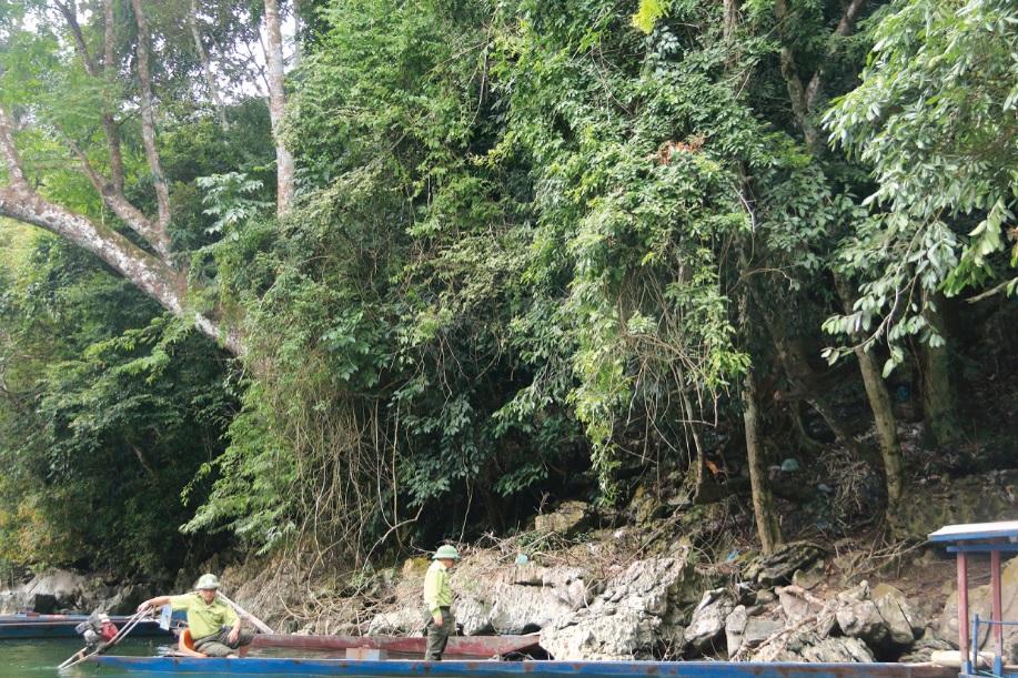 Cần có một hệ thống thông tin hiện đại, chính thống trong quản lý, bảo vệ và phát triển rừng. (Trong ảnh: Một góc Vườn Quốc gia Ba Bể, Bắc Kạn)