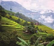 Kinh tế Việt Nam năm 2019