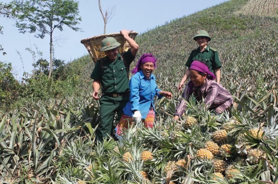 Bộ đội Biên phòng giúp người dân xã Bản Lầu thu hoạch dứa.