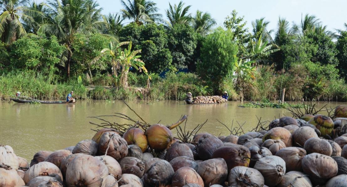 Dừa khô nguyên liệu tập kết chờ thương lái đến mua.