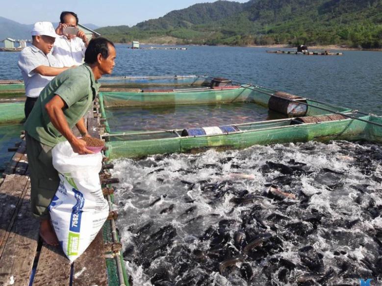 Lĩnh vực nuôi trồng thủy sản là một trong những thế mạnh của ngành Nông nghiệp Việt Nam.