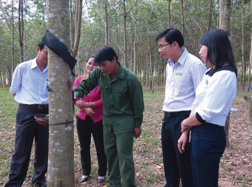 Lãnh đạo NHCSXH Kon Tum kiểm tra việc sản xuất của một hộ gia đình vay vốn.