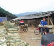 Quản lý rừng theo chuẩn Quốc tế