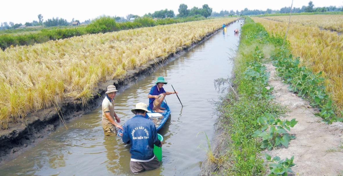 Mô hình tôm-lúa mang lại hiệu quả kinh tế cao và bền vững cho nhiều hộ dân miền Tây.