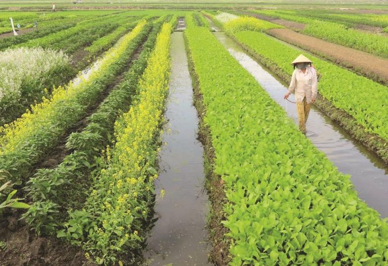 Mô hình trồng rau sạch ở xã Điền Lộc.