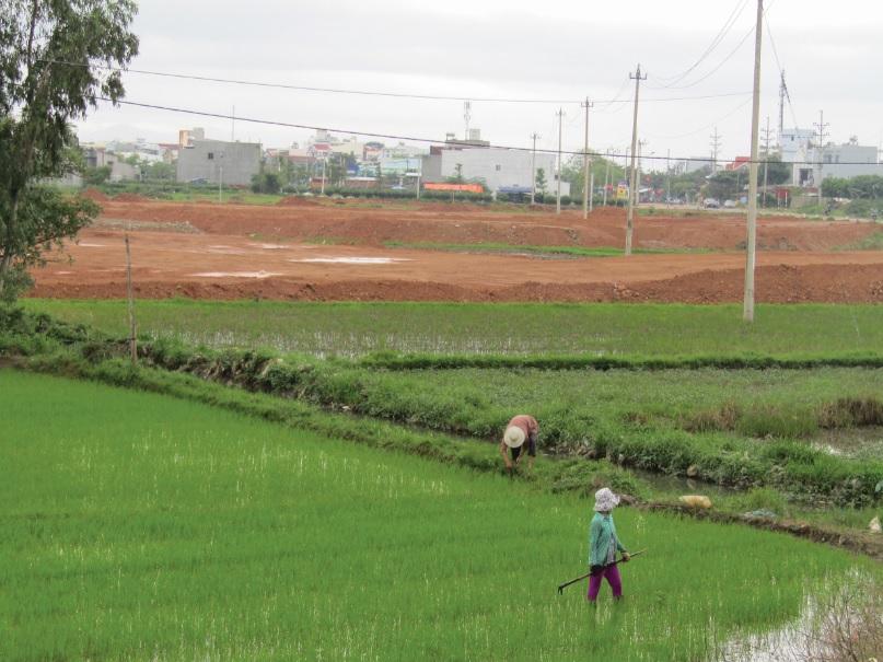 Ruộng của người dân bị thu để làm dự án khiến đời sống người dân gặp nhiều khó khăn.