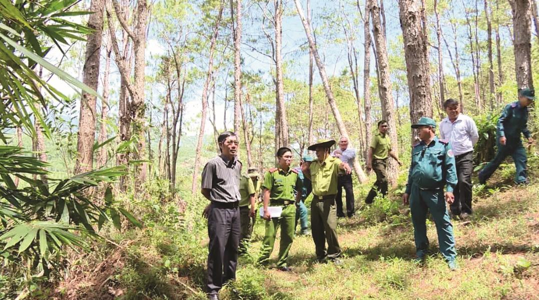 Khánh Hòa: Nhiều giải pháp  tăng độ che phủ rừng