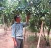 Nông dân huyện Mường Ảng