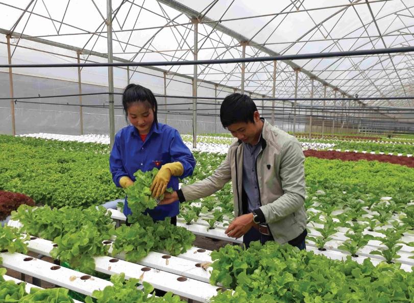 Làm nông nghiệp công nghệ cao cần nguồn vốn lớn. (Ảnh minh họa)