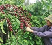 Cà phê Việt