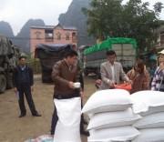 Chính sách hỗ trợ gạo
