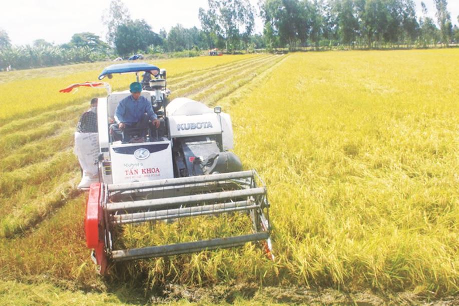 Sử dụng nước vừa đủ cho sản xuất nông nghiệp là một trong những giải pháp tiết kiệm nguồn tài nguyên nước.