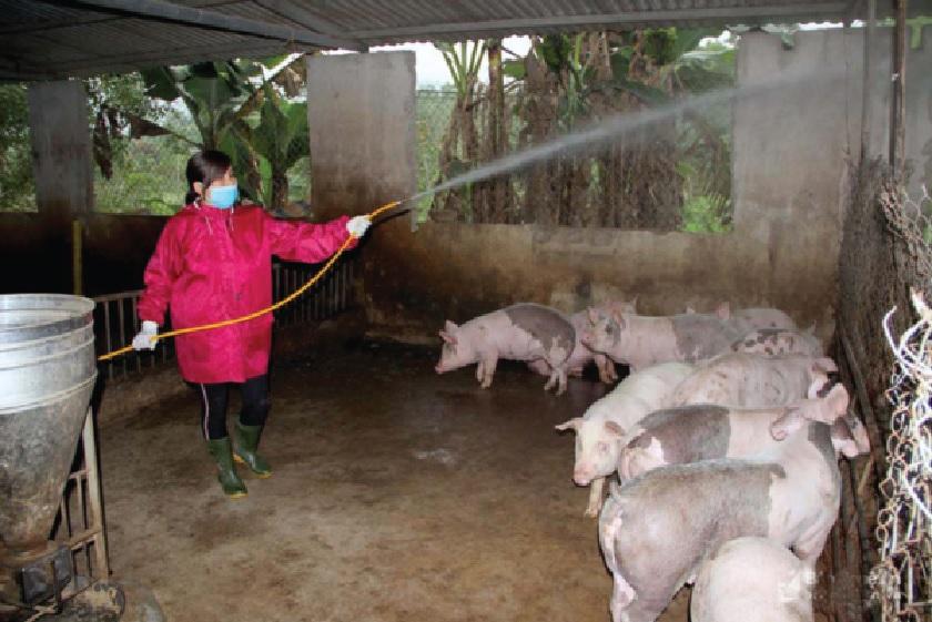 Người dân Tân Kỳ tích cực vệ sinh chuồng trại phòng chống bệch dịch tả lợn châu Phi.