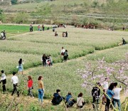Đồng Luông