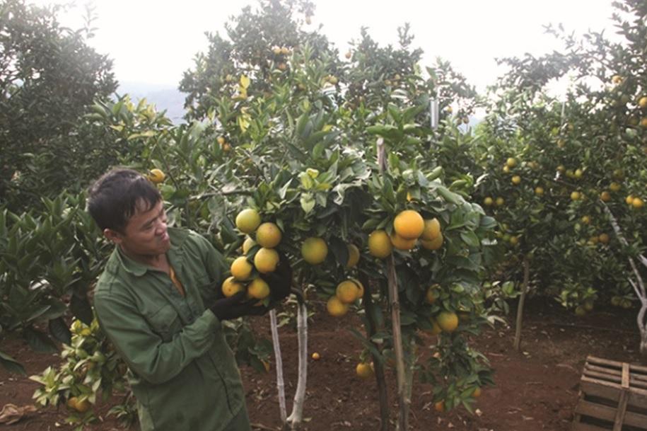 Giá trị sản xuất nông nghiệp sau khi liên kết tăng từ 20-25%.