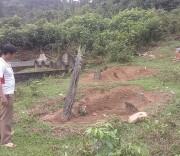Chôn người mất trong rừng phòng hộ