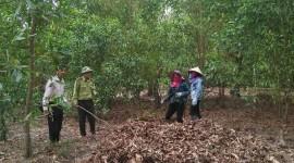 Bảo vệ rừng trong mùa nắng nóng