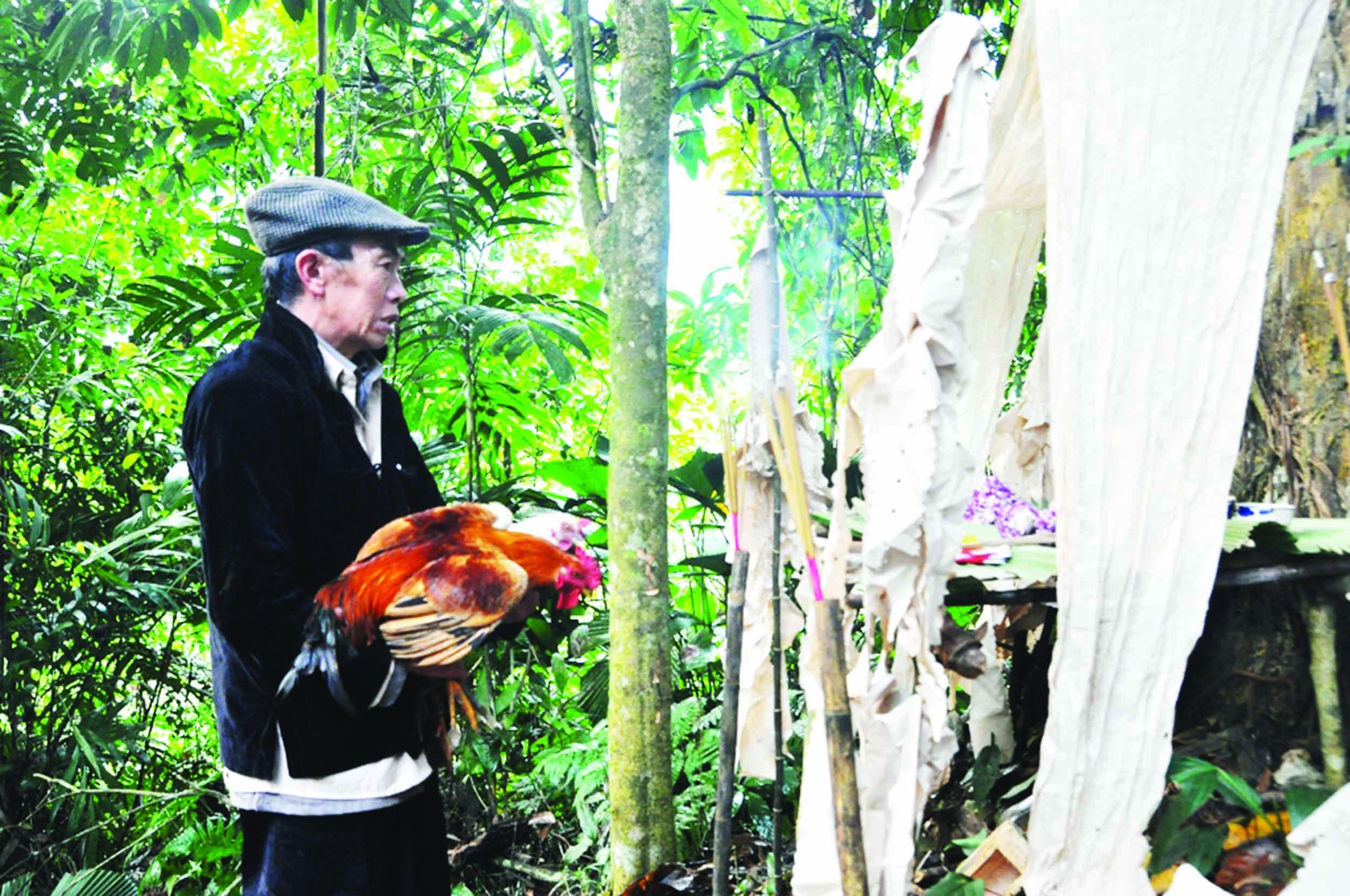 Lễ hội Tết rừng của đồng bào Mông ở Nà Hẩu góp phần bảo vệ và phát triển rừng nơi đây. (Trong ảnh: Đồng bào Mông thực hiện nghi lễ cúng thần rừng.)