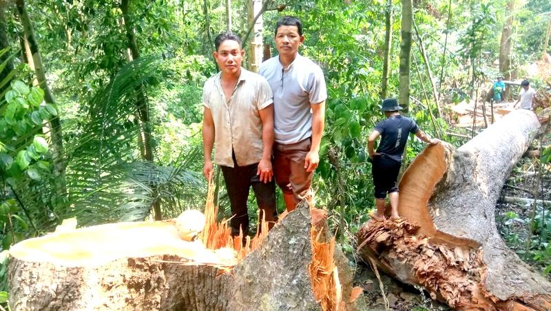 Hồ Văn Thanh và Hồ Văn Long tại khu vực rừng phòng hộ Đắk Mi vừa bị chặt phá (Ảnh: Công an huyện Phước Sơn cung cấp)