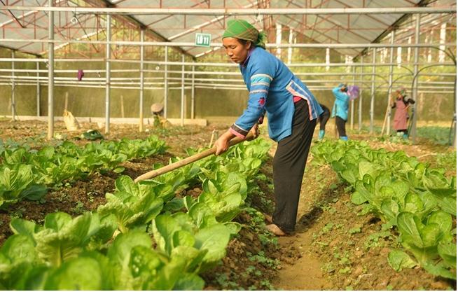 Nông dân Yên Bái đang ngày càng quan tâm đến việc ứng dụng KH&CN vào phát triển nông nghiệp.