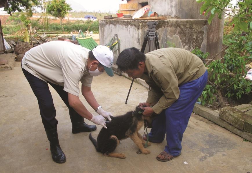 Để phòng tránh bệnh dại, các hộ gia đình cần đưa vật nuôi chó, mèo đi tiêm phòng đầy đủ. Ảnh TL