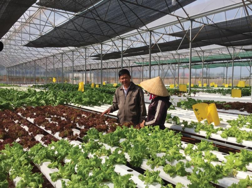 Mô hình trồng rau thủy canh của Công ty Cổ phần Nông nghiệp công nghệ cao Agrieco Việt Nam.
