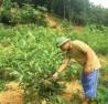 Trồng rừng theo chứng chỉ quốc tế FSC