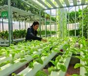 Nông nghiệp công nghệ cao ở Điện Biên