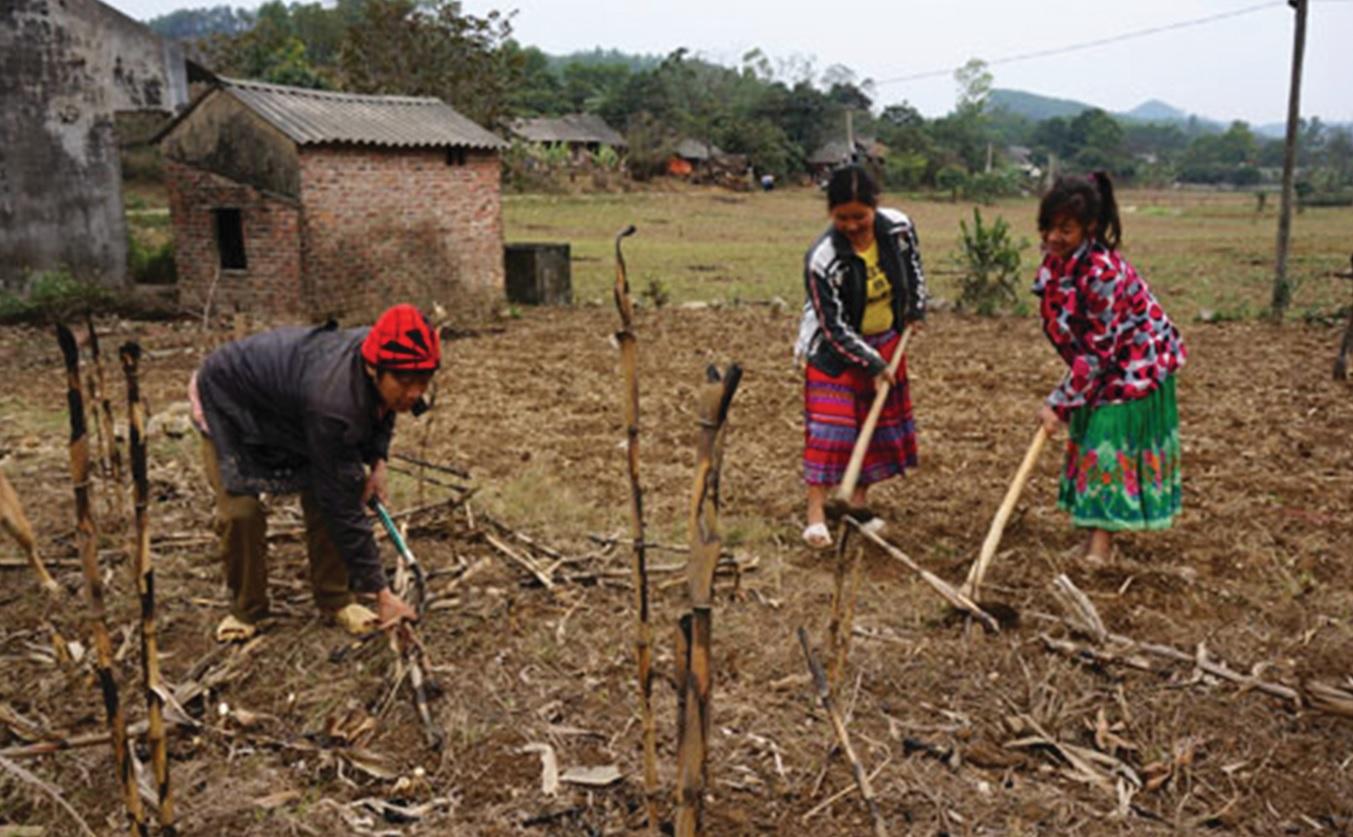 Bà con dân tộc Mông ở bản Trung Sơn, xã Quang Sơn đang làm đất để tra hạt vụ Xuân năm 2019.
