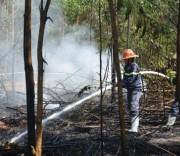 cháy rừng