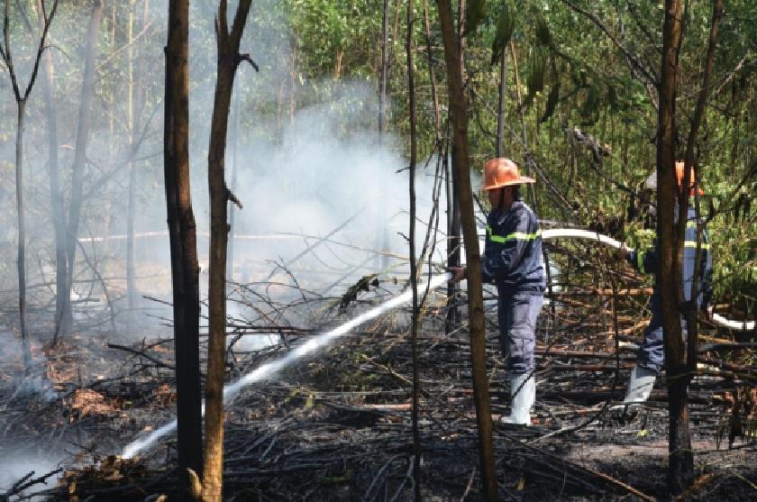 Các ngành chức năng tỉnh Quảng Ngãi diễn tập phòng chống cháy rừng.
