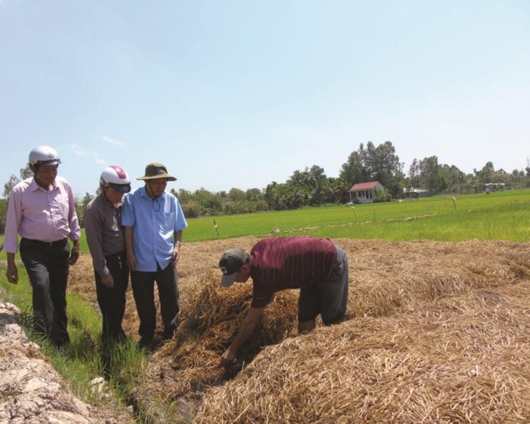 Mô hình sản xuất nấm rơm được đánh giá là thích ứng với biến đổi khí hậu.