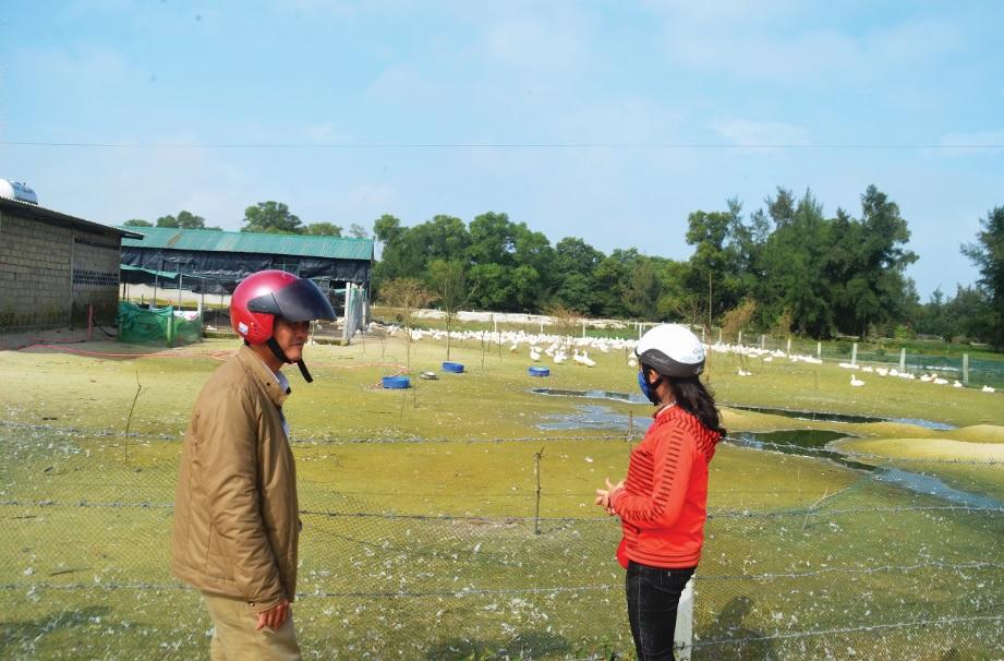 Mô hình chăn nuôi vịt đẻ tại khu chăn nuôi tập trung thôn Trung An.