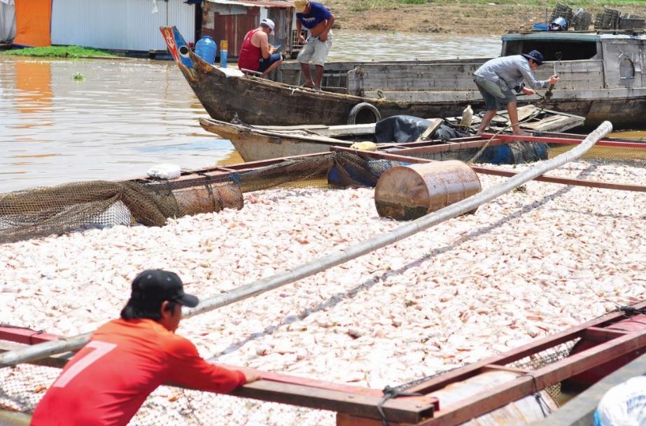 Nghề nuôi cá bè mang lại hiệu quả kinh tế cao nhưng cũng tiềm ẩn nhiều rủi ro. (Trong ảnh: Cá chết hàng loạt ở làng bè La Ngà hồi tháng 5/2018). Ảnh tư liệu.