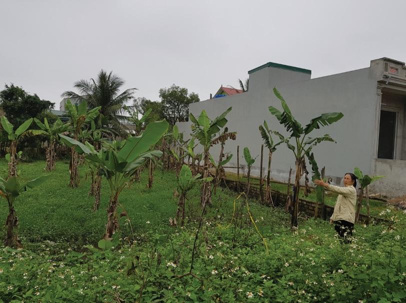 Diện tích đất của gia đình bà Nguyễn Thị Vân bị thu hồi rất mập mờ.