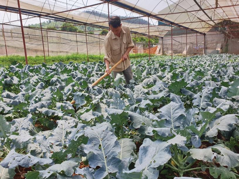 Anh Nguyễn Văn Chu chăm sóc những luống rau theo tiêu chuẩn VietGAP của gia đình.