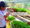 trồng rau sạch từ vỏ cà phê