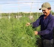 Cây trồng thích ứng với biến đổi khí hậu